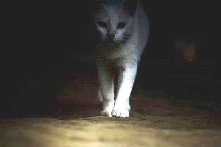 «Η γάτα Αγαύη» της Λούλας Αναγνωστάκη