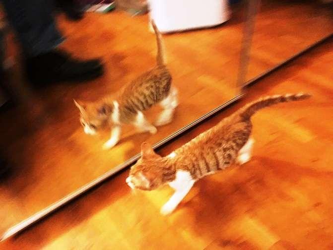 3e457535d1ad Ένα γατάκι στον καθρέφτη (Γρηγόριος Ξενόπουλος)