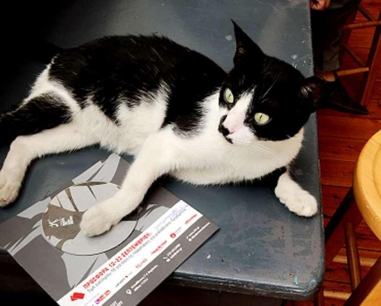 Kitty δυνάμεις συμπαίκτη δωρεάν online