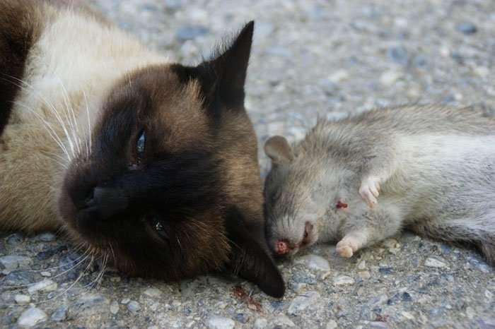 διαδικτυακές ιστοσελίδες γνωριμιών για γάτες προξενιό T25