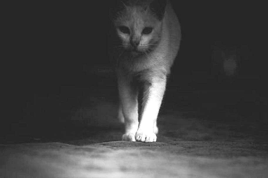 76baf58d1bc3 Διαβάστε το κείμενό της με τον τίτλο «Η γάτα Αγαύη» που αναρτήθηκε εδώ στο  catisart.g στις 15 Οκτωβρίου 2015.