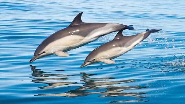 Αντώνης Σουρούνης, «Άνθρωποι και δελφίνια»