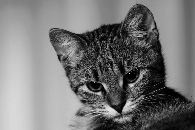 Το ποίημα της Γλυκερίας Μπασδέκη στον Γιώργο Χειμωνά, μιλάει για την Αγαύη