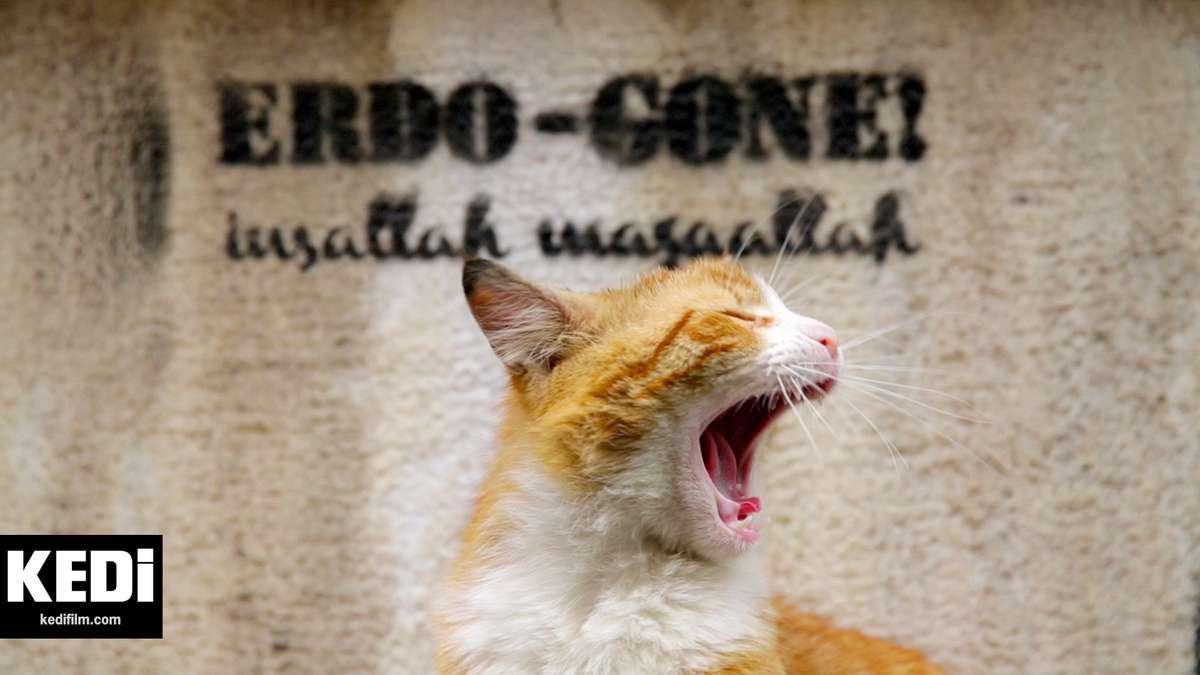 56d11a425af5 Οι αδέσποτες γάτες της Κωνσταντινούπολης (όπως και των άλλων μεγάλων πόλεων  της Τουρκίας