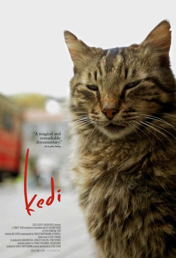 dbf634385ea3 Όποιοι έχουν επισκεφτεί την Πόλη θα έχουν σίγουρα προσέξει τον απίθανο  αριθμό από γάτες που τριγυρίζουν στις γειτονιές και στα σοκάκια