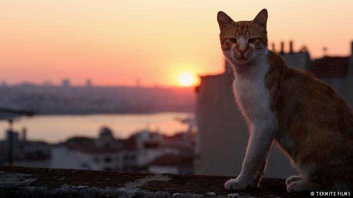 Οι «Γάτες της Κωνσταντινούπολης» («Kedi») έφτασαν και στην Ελλάδα…