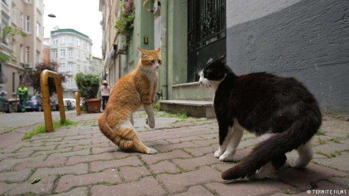 "d1c98b8a5db1 Ιδιαίτερο ενδιαφέρον έχουν οι σκηνές με μάχες μεταξύ γατών στις άκρες των  δρόμων με ""μήλον της έριδος"" λίγο φαγητό. Ειδικά οι γάτες που μόλις έγιναν  ..."