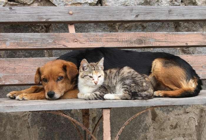 Ψήφισμα εναντίον της θανάτωσης και της ευθανασίας των αδέσποτων ζώων στην Ελλάδα και στην Ε.Ε.