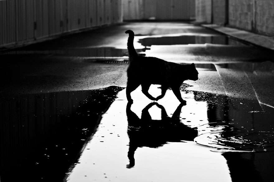Τάσος Δενέγρης – Μαύρο αγκάθι
