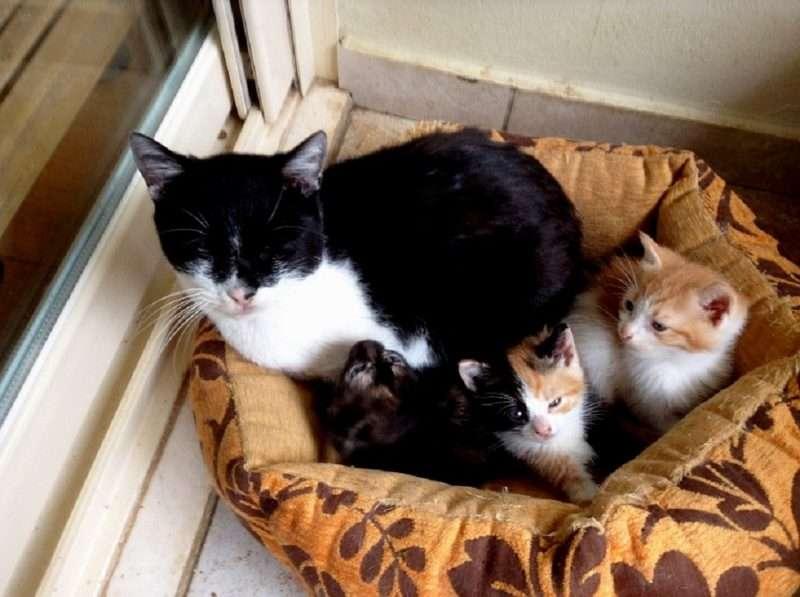 γάτες και ποντίκια παιχνίδια που χρονολογούνται