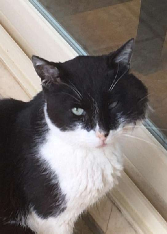 δωρεάν sites γνωριμιών για τους λάτρεις της γάτας αναφοράς γνωριμιών