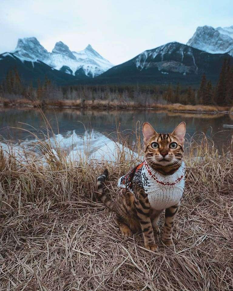 Ο χώρος γνωριμιών για τις γάτες