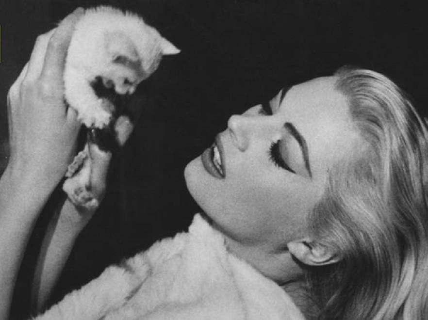 Ανίτα Έκμπεργκ. Με το γατάκι της «κέρδισε» την καρδιά του Μαρτσέλο στη Φοντάνα ντι Τρέβι