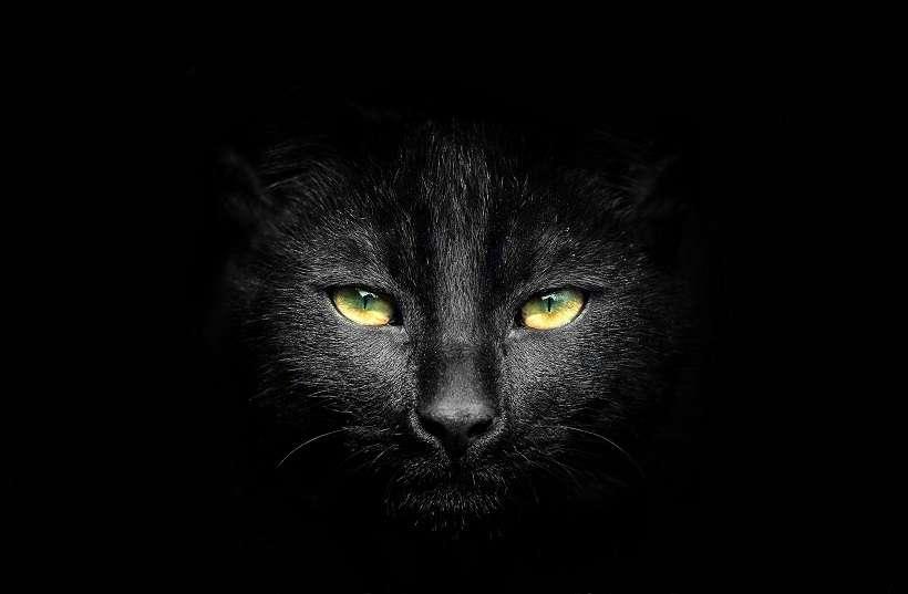 Στέλλα Σκοπελίτου, Πώς ν' αγαπάς μια γάτα!