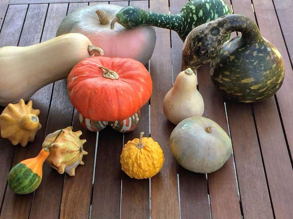 Κολοκύθα, το απόλυτο φθινοπωρινό λαχανικό