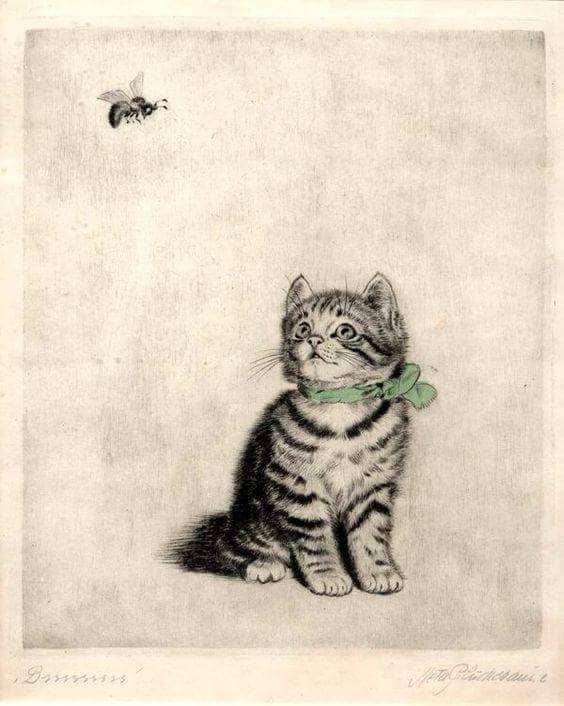 Δημήτρης Καρακίτσος, Η γάτα του Σεβάχ