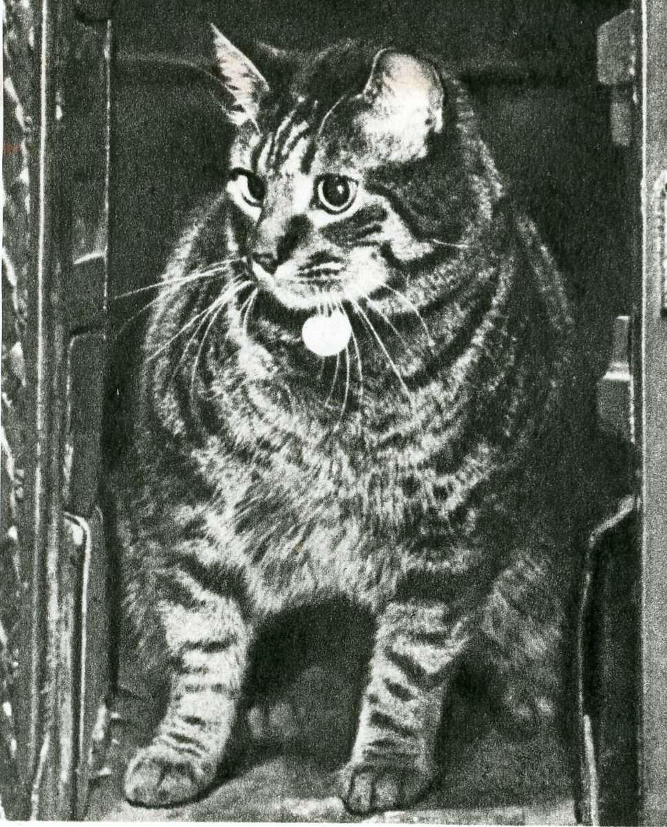 Οι γάτες των ταχυδρομείων