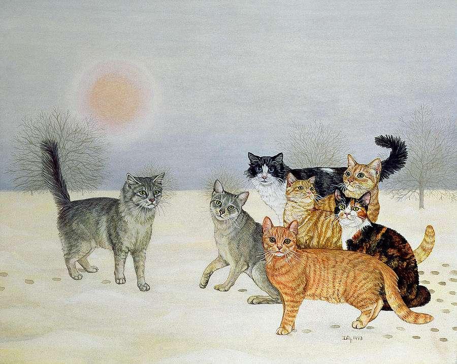 Βοηθήστε τις αδέσποτες γάτες από τις σκληρές καιρικές συνθήκες