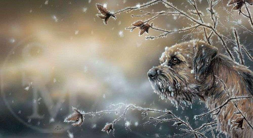 Προστατέψτε τα οικόσιτα αλλά και τα αδέσποτα ζώα από το κρύο