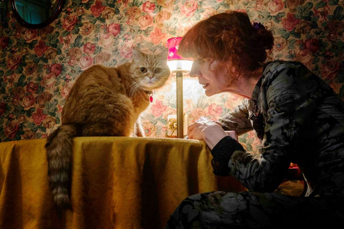 Ζυράννα Ζατέλη: Όνειρο με γάτες