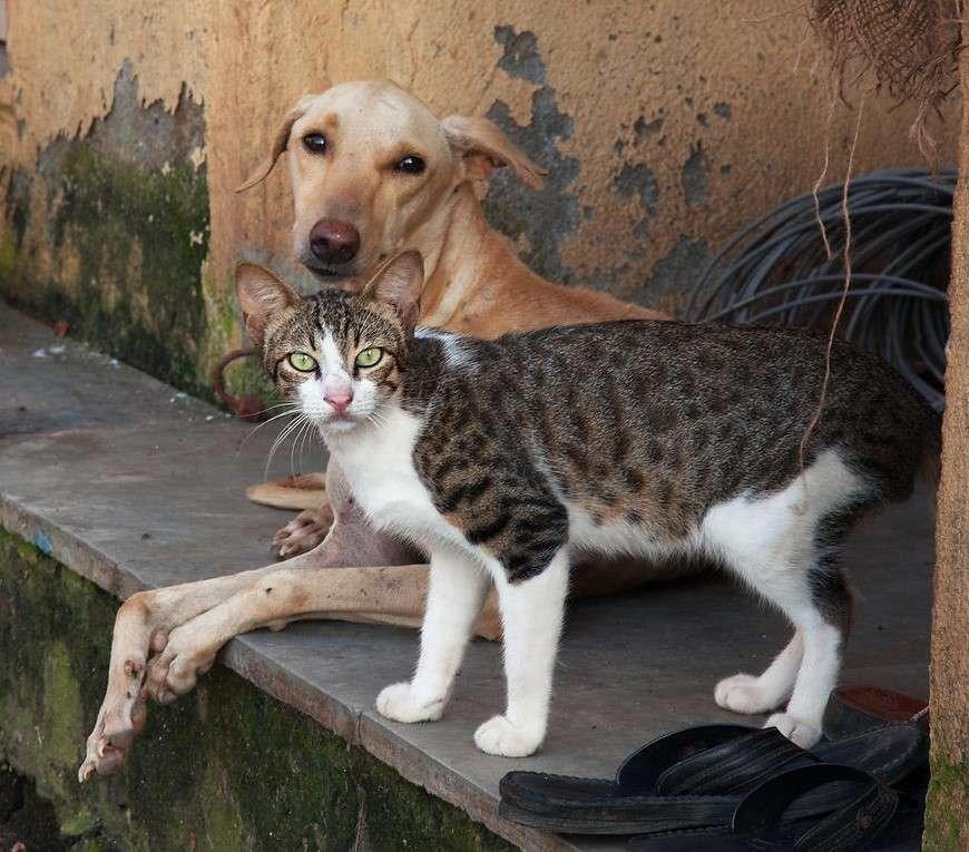 Γιατί δεν ψηφίστηκε η Συνταγματική κατοχύρωση της προστασίας των ζώων – «Προεκλογικές ευαισθησίες και υποκρισίες»