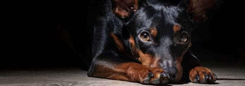 Τα 14 κίνητρα και το ψυχολογικό προφίλ των εφήβων σε περιπτώσεις κακοποίησης ζώων