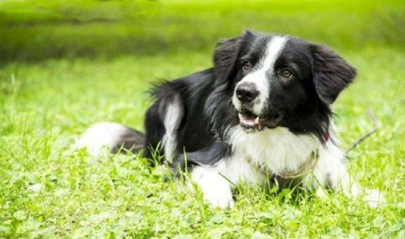«ΝΟ ΚΑΚΑ». Οικολογική ελληνική πατέντα για ανέπαφο μάζεμα των ακαθαρσιών των σκύλων