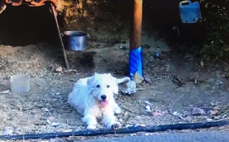 Ο σκύλος του Χάρη τού κάνει παρέα στο σημείο που σκοτώθηκε πριν από ενάμιση χρόνο