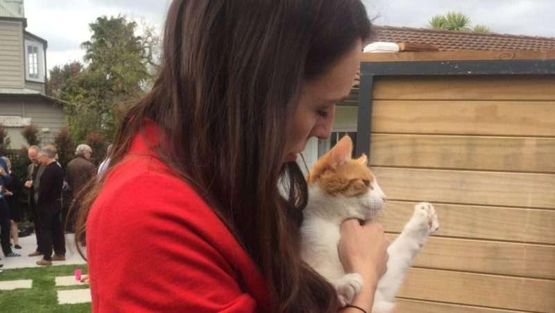 Site γνωριμιών για τους λάτρεις της γάτας