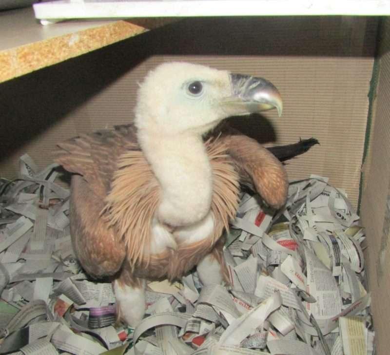 Ανάγκη από εφημερίδες έχει ο Σύλλογος Προστασίας Περίθαλψης Άγριας Ζωής – ANIMA