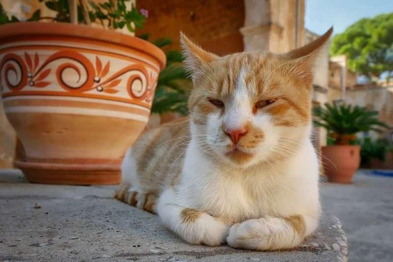 Φρίκη και πάλι στην Κρήτη – Τύφλωσαν, βασάνισαν και σκότωσαν γάτες στο Ακρωτήρι Χανίων