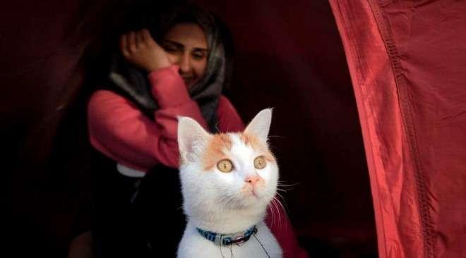 Ο… Σύρος γάτος πρόσφυγας της Ειδομένης ζει πλέον ξέγνοιαστος και ασφαλής στη Σουηδία