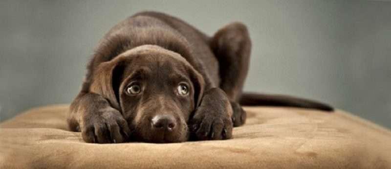 Επειδή η βία κατά των ζώων συντροφιάς δεν έχει πατρίδα, σειρά έχει η Καλαμάτα…