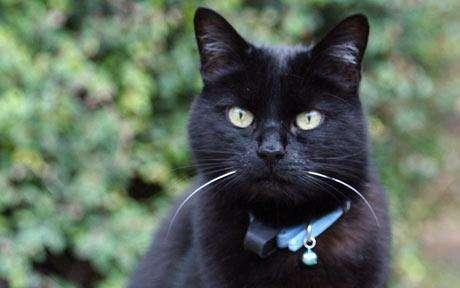 O κτηνίατρος Μανώλης Βορρίσης μας δείχνει γιατί δεν πρέπει στις γάτες να φοράμε περιλαίμια