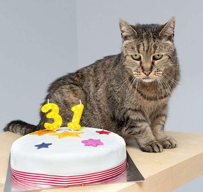 Η γηραιότερη γάτα στον κόσμο είναι 31 χρονών και έχει ακόμα αρκετές ζωές απόθεμα!