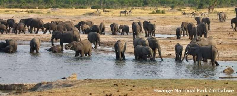 Η έλλειψη νερού σκότωσε 155 ελέφαντες στη Ζιμπάμπουε και στην Μποτσουάνα