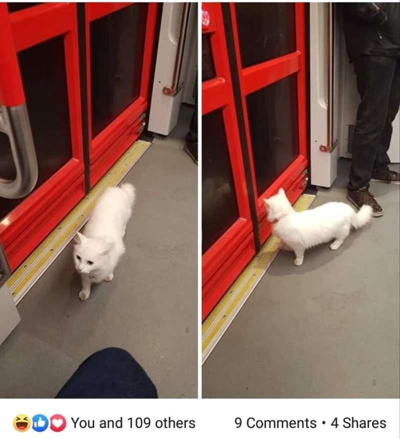 Bowie: Ο γάτος που ταξιδεύει με το τραμ της γραμμής 2 της Χάγης