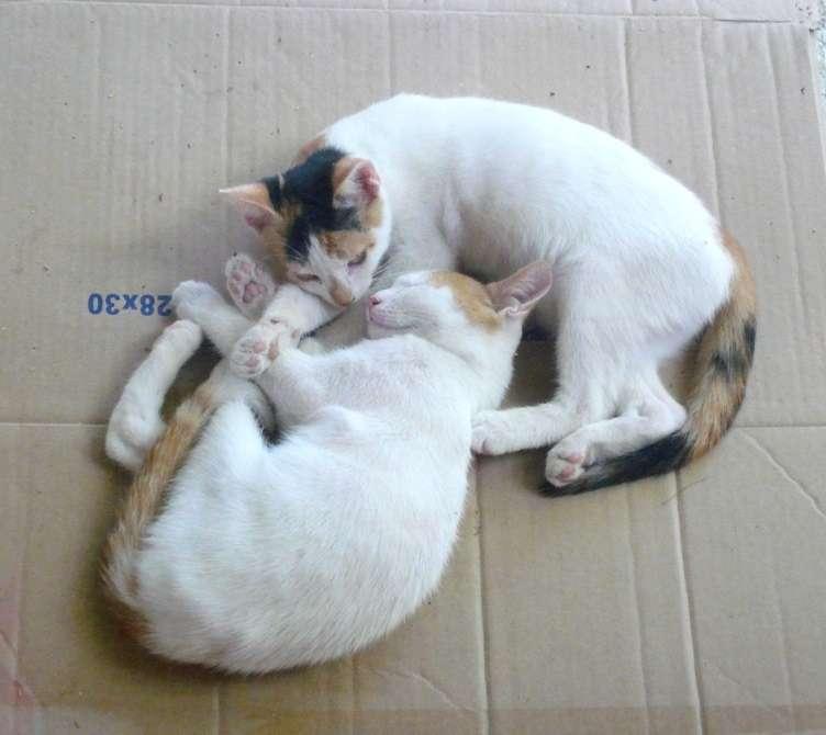 Αιγινήτικα γατάκια ζητούν επειγόντως οικογένεια