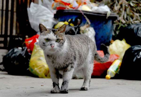 """Χριστουγεννιάτικο Bazaar του Σωματείου Περίθαλψης και Προστασίας Αδέσποτων Ζώων """"Stray.Gr"""""""