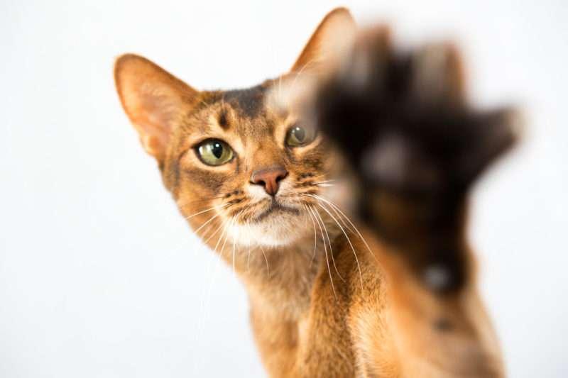 Όταν οι λέξεις δεν στρώνουν κάποια γάτα περνά παραπονεμένη – Του Γιάννη Πάσχου