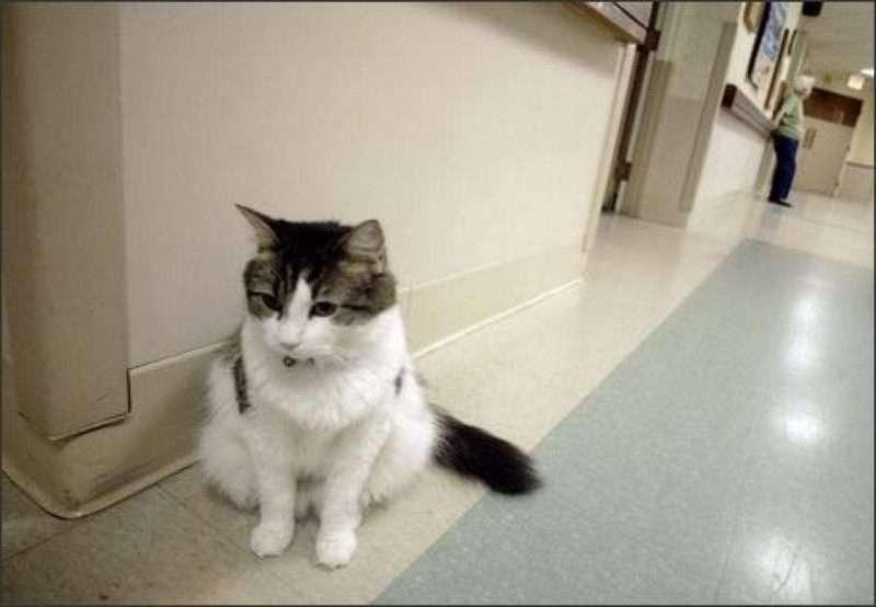 Ο γάτος Oscar του οίκου ευγηρίας