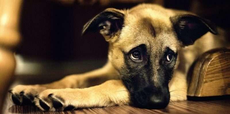 Κακοποίηση ζώων και αντρική βία