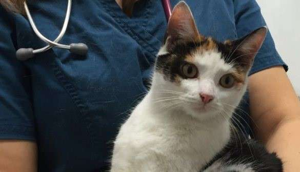 Γάτα βρέθηκε ζωντανή σε μηχανή αυτοκινήτου ύστερα από ταξίδι 200 χιλιομέτρων