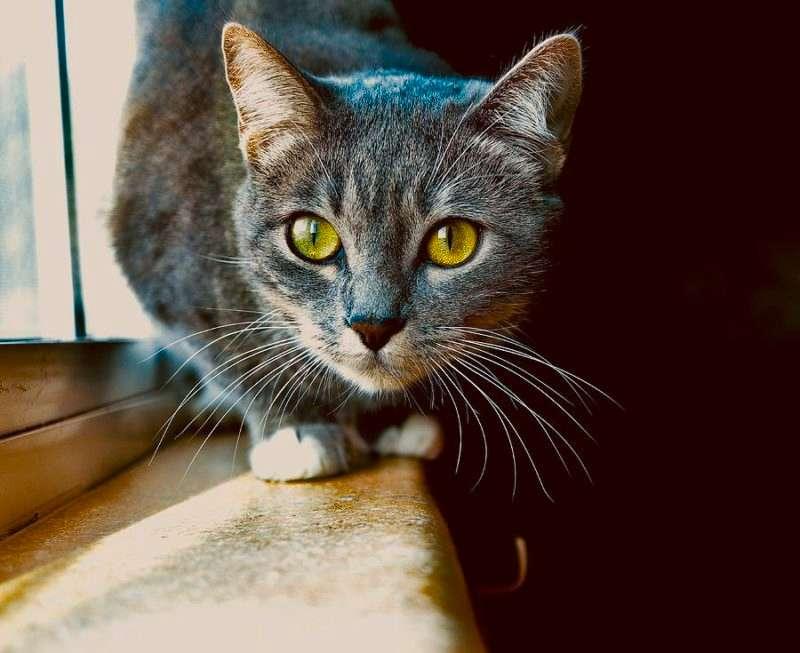 Ανεξιχνίαστες οι εκφράσεις και τα συναισθήματα της γάτας για τους περισσότερους ανθρώπους