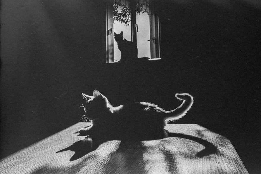 Γάτα, η θεά