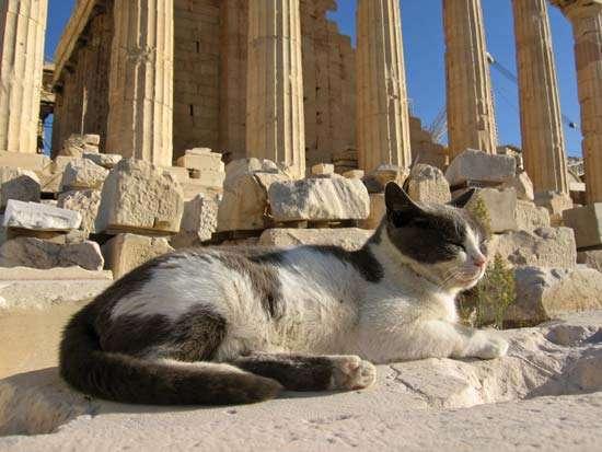 Η γάτα Ραμαζάν την οποία μνημόνευσε σε ποίημα ο Γιώργος Σεφέρης (Δημήτρης Καρακίτσος)