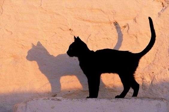 Ο χαρακτήρας της γάτας επηρεάζει το χρώμα της;