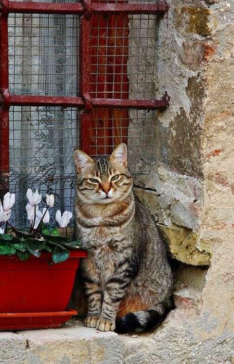 c6ea888bbffe Οι γάτες που ζουν μέσα στο σπίτι