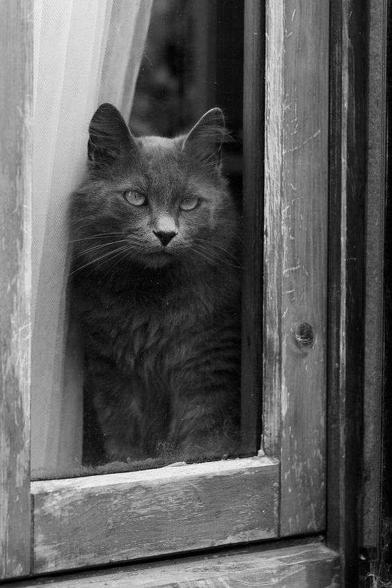 916453abb748 Πάντως οι γάτες κρατούν τα πολύ ιδιαίτερα νιαουρίσματά τους (αυτά με τα  οποία ζητούν πράγματα) για εμάς τους ανθρώπους. Η ικανότητά μας να  ανοίγουμε ...