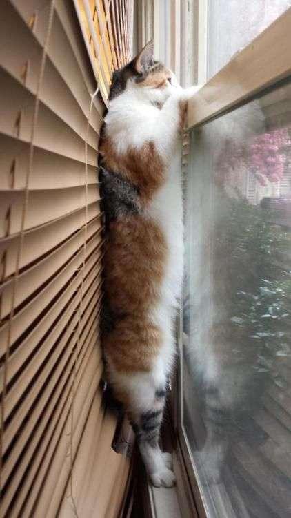 "965080fc4ccb Επίσης η γάτα θα κάνει ""χχχχχς"" σε αντίπαλες γάτες στη γειτονιά ή ακόμα και  στο σπίτι"